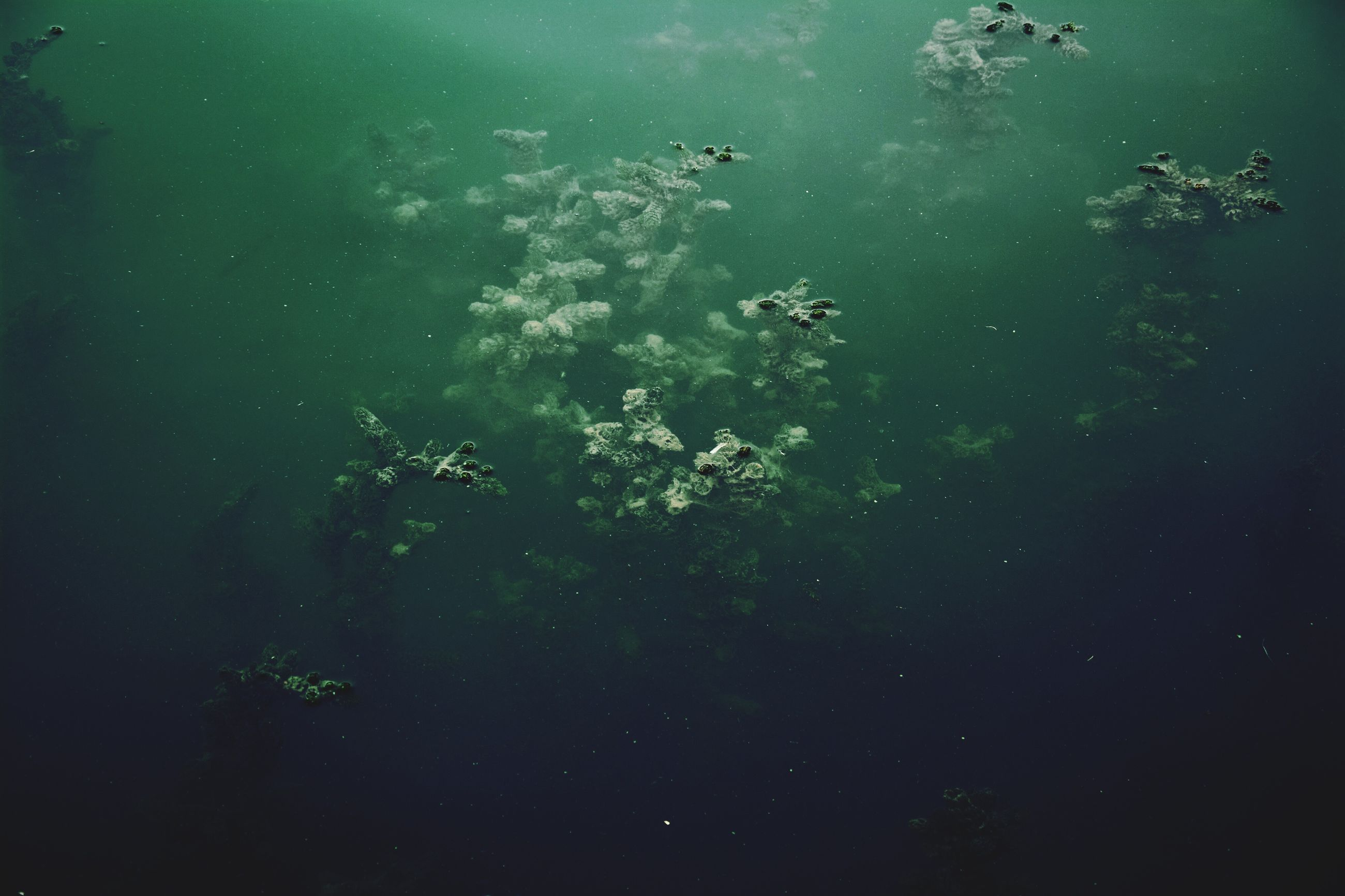 water, underwater, no people, nature, swimming, sea life, green color, beauty in nature, outdoors, undersea, day, close-up