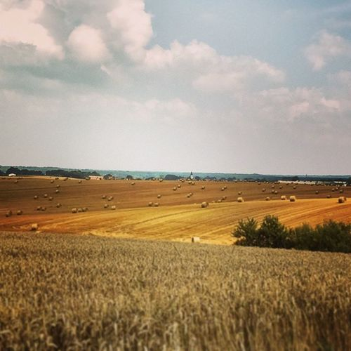 Fields in Saxony. Countryside