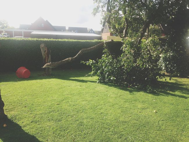 our tree fell down, so sad :( Trees Tree Taking Photos Enjoying Life