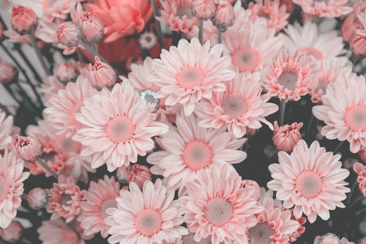 Flowering Plant Flower Fragility Vulnerability  Freshness Plant Beauty In Nature Petal Flower Head Inflorescence Close-up Growth Pink Color No People Day Nature Outdoors High Angle View Pollen Full Frame Springtime Bunch Of Flowers