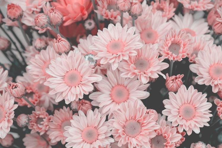 Pink blooming flowers outdoors