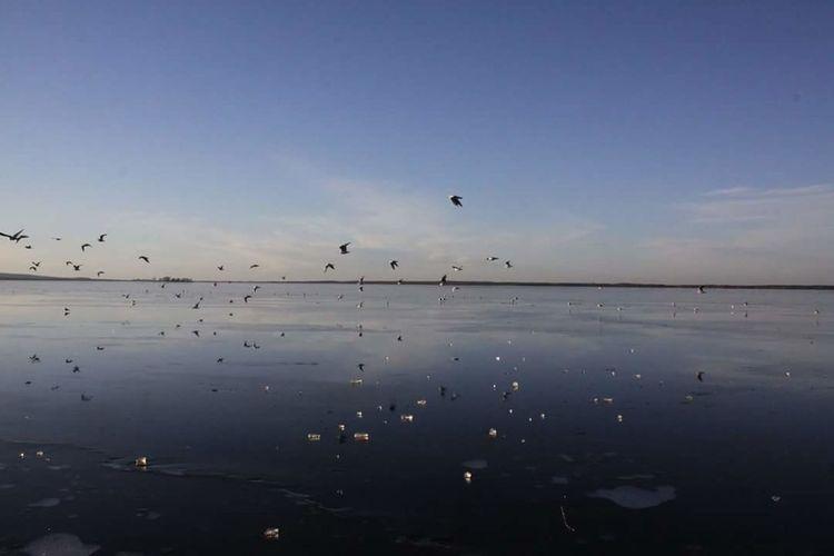 Fly away Lovely Weather Steinhude-am-meer.de - Dein Meer-Foto Animals Nature Lover Ice