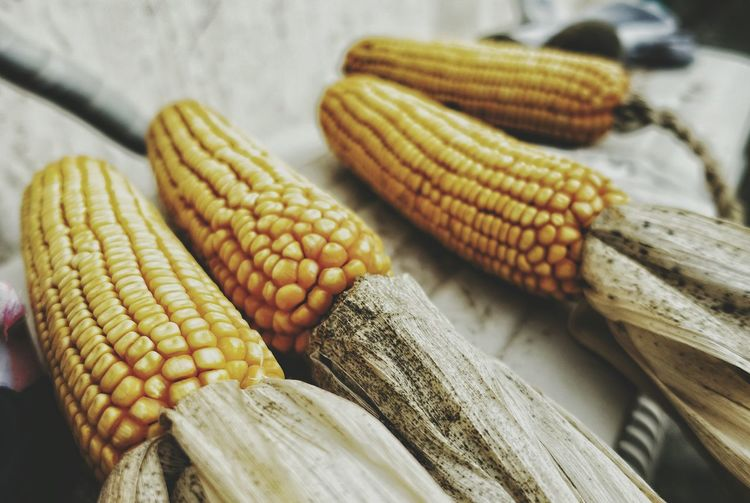 China Photos Corns Maize Dry Urban Urban Lifestyle Fall Beauty Fall Colors Fresh Scent Streamzoofamily