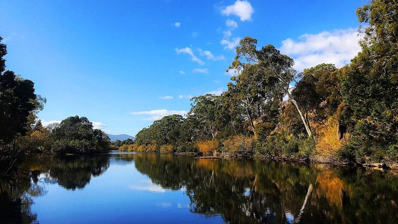 Tree Reflection Water Nature Beauty In Nature Scenics Sky Tranquil Scene River Tranquility Outdoors Day No People Growth Waterfront Cloud - Sky Forest Tasmania Stand Up Paddling