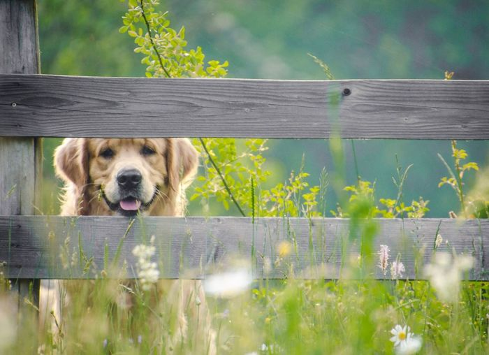 Portrait of dog by fence against plants