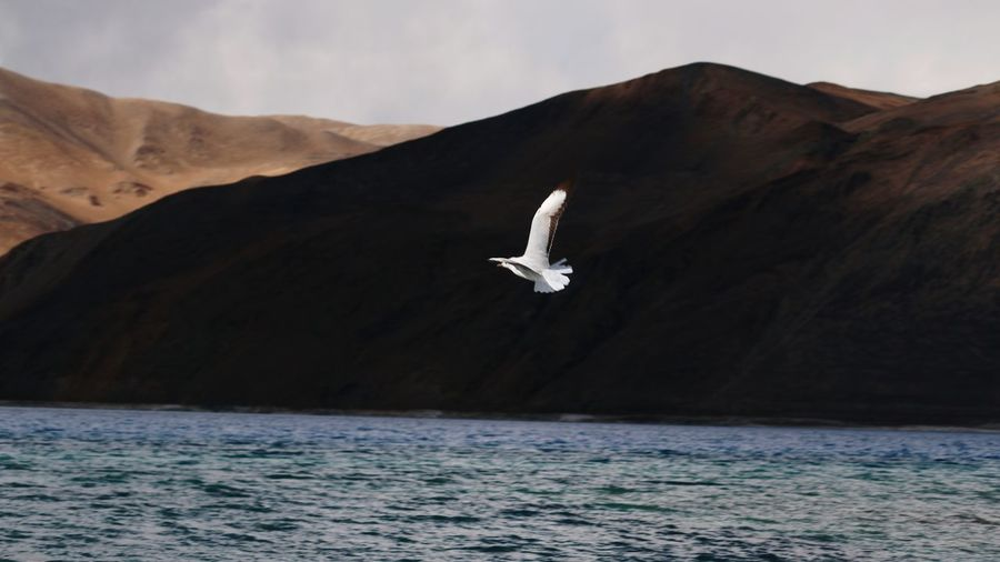 Seagull flying over lake against mountains