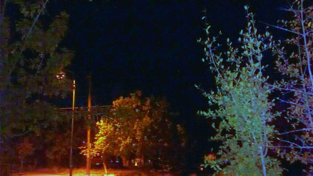 Nught Moves Trees And Sky Clouds And Trees Cheese! Portals Perspectives And Dimensions My Hood Cartoonish CatsCosmos