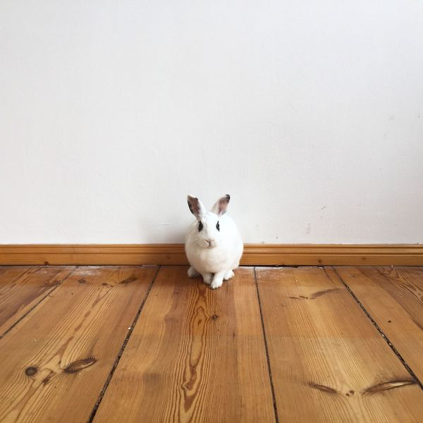 Bunny  Check This Out Minimalism Wall Simplethings Architectural Detail Animals Rabbit My Fuckin Berlin EyeEm Animal Lover Smart Simplicity Hello World Precious Design POV Market Bestsellers 2017