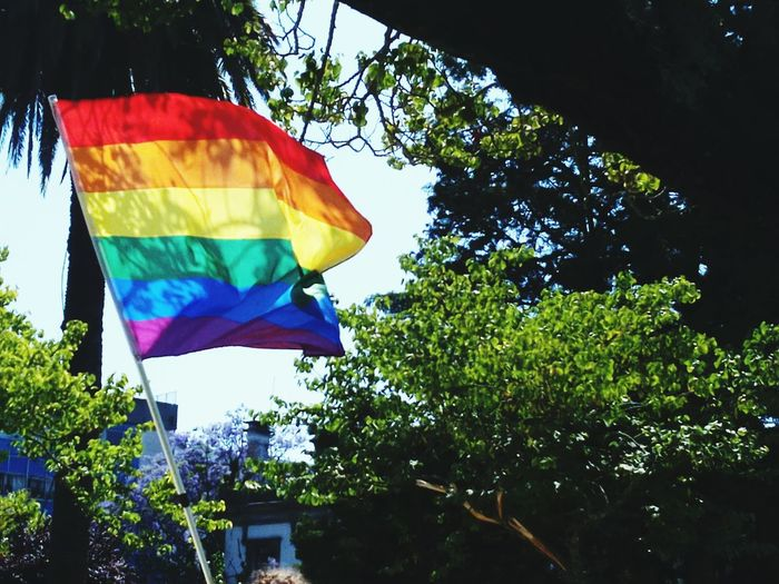 Pride and hope Art And Craft World Trees Park Flag Flags In The Wind  #pride2018 #PrideParade #pridemonth Lgbt Pride LGBT Rainbows Lgbt Pride LGBT Parade LGBTQ Rights Lgbt Flag Lgbt Family Love Is Love Tree Multi Colored Flag Sky