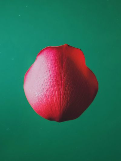 Close-up of red flower against green background