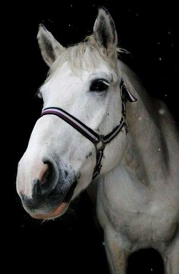 Russian horses are very beatiful😍🐴 His name is Perepad😁😇 Horses <3