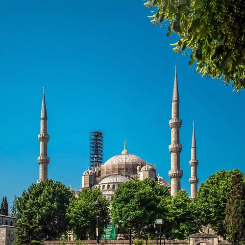 Blue Mosque Tree Sky Building Exterior Architecture Religion Built Structure Plant Place Of Worship Belief Travel Destinations Clear Sky No People Low Angle View Building Blue Spirituality Tower Tall - High Outdoors Nature