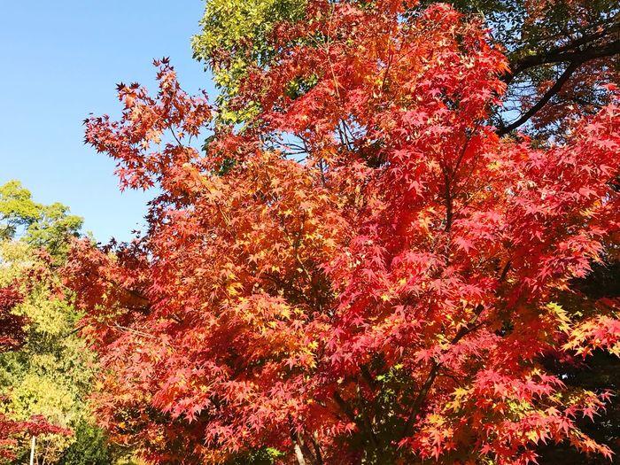 紅葉🍁 Nature