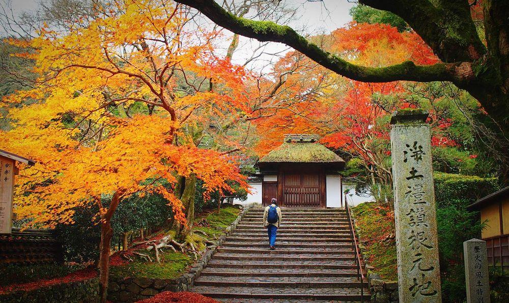 安楽寺 京都 Kyoto Kyoto, Japan Autumn Autumn Colors Hello World Kyototrip Relaxing Enjoying Life 2015  Kyoto Autumn Autumn Leaves Beauty In Nature