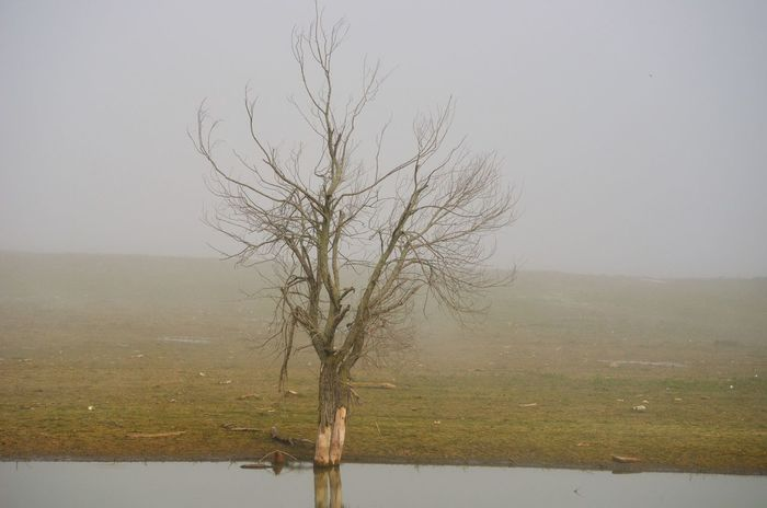 EyeEm Best Shots EyeEmNewHere Bare Tree Isolated Lone Tree Tree By The Water Edge Tree In Fog