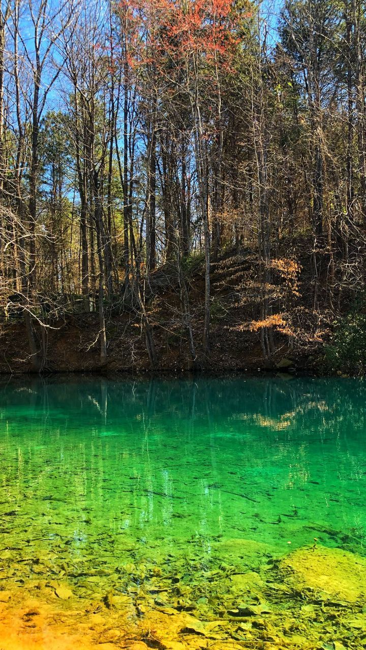 water, plant, tree, tranquility, beauty in nature, scenics - nature, lake, tranquil scene, no people, nature, forest, green color, day, land, reflection, growth, non-urban scene, outdoors, swamp, flowing water