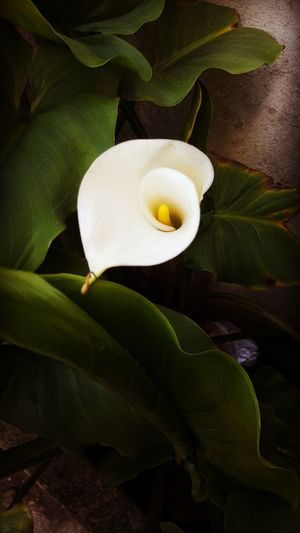 Egg Food Healthy Eating Freshness No People Egg Yolk Indoors  Flower Nature Close-up