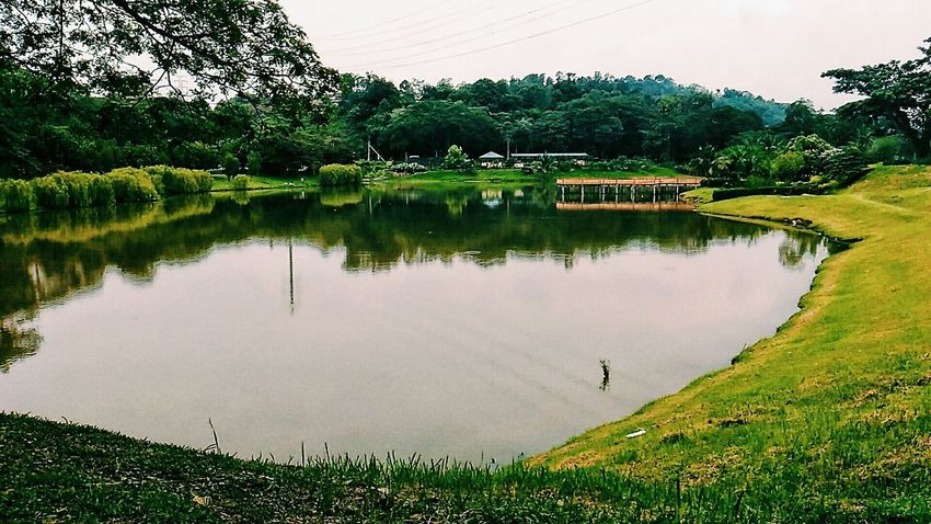Lake Water Reflection Tree Outdoors Nature Tranquility Bird Day Scenics Landscape Sky Rural Scene No People Beauty In Nature Golf Course Snapseed Popular Photos Portrait Photography Malaysia Asus VSCO Zenfonemax Zenfonemalaysia