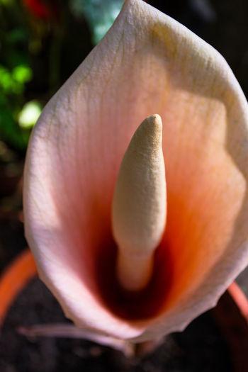 Close-up of orange flower head