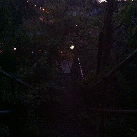Junglewomanstatus Myleavesaresogreen Citysteplife PGH Leaves Spring