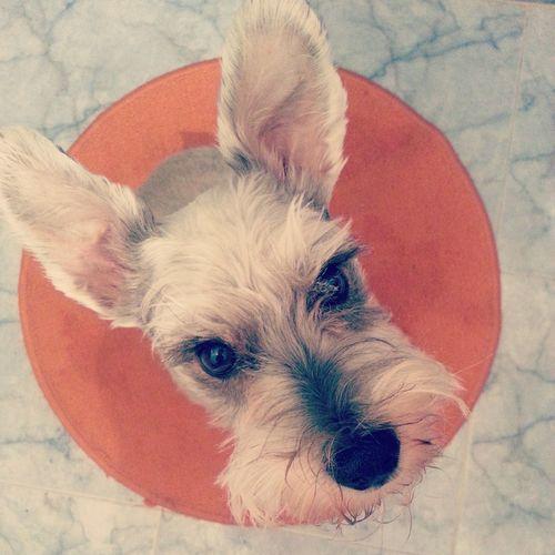 Petsofeyeem Animal Themes Pets Pets And Animals EyeEmNewHere Dog Lover Dog❤ Dogoftheday Dogmodel Doglife Dog Photography