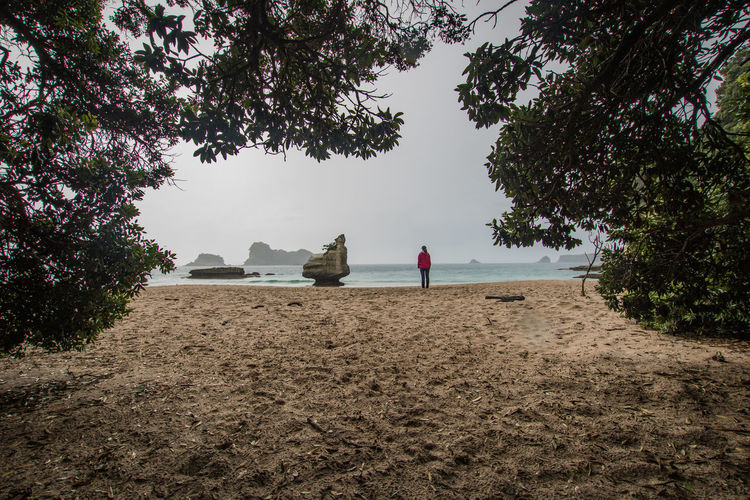 young woman standing at a near the cathedral cave in new zealand Travel Beach Beauty In Nature Cathedral Cove Coromandel Peninsula Day Growth Land Nature New Zealand Non-urban Scene Outdoors Plant Protection Real People Rear View Rock - Object Scenics - Nature Sea Sky Tranquil Scene Tranquility Tree Water Young Woman Summer Road Tripping The Great Outdoors - 2018 EyeEm Awards