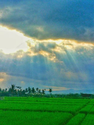 Tree Rural Scene Agriculture Sunset Galaxy Field Blue Sky Cloud - Sky Landscape Rice Paddy Cereal Plant Rice - Cereal Plant Plantation Cultivated Land