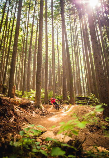 Man Riding Bicycle Against Trees At Forest