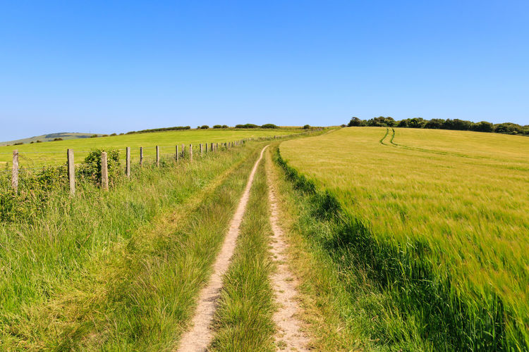 Pathway through the countryside Agriculture Beauty In Nature Blue Blue Sky Cereal Plant Clear Sky Crop  Day Diminishing Perspective Field Grass Growth Landscape Nature No People Outdoors Pathway Rural Scene Scenics Sky South Downs Sussex The Way Forward Tire Track Vanishing Point