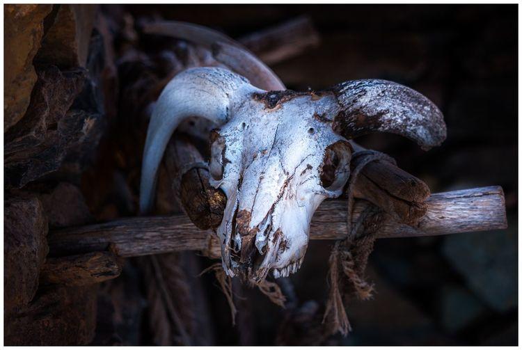 Skull Close-up