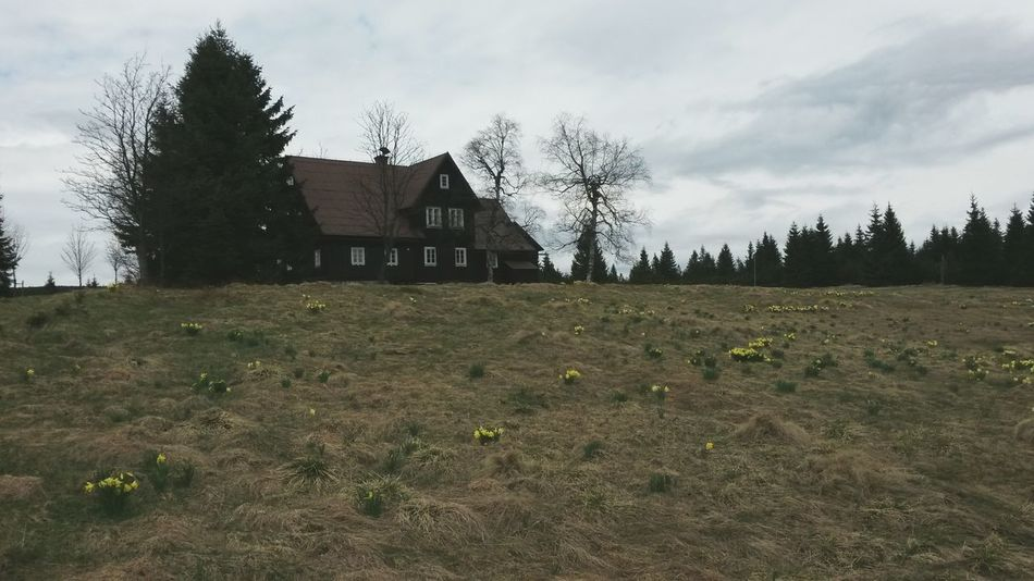 "Další fotka ze série Rodinný výlet za všechny prachy ""😂 Tree EyeEm Lovelyday Building Exterior Farmhouse Outdoors Day Nature Czech Jizerky Beauty In Nature Tranquility Flowers Narcissus Flowers Lovely"
