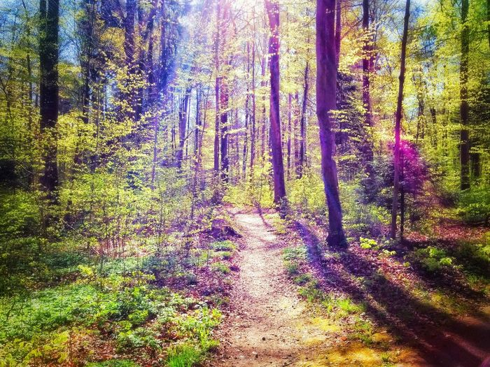 Forest Beutiful  Nature Photography Natural Beauty Nature Tree Colors Colorful Sureal The Great Outdoors - 2015 EyeEm Awards
