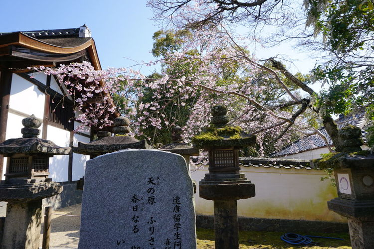 Architecture Beauty In Nature Building Exterior Built Structure Cherry Blossoms Clear Sky Day Flower Garden Hanging Japan Nature No People Outdoor Photography Outdoors Religion Sky Spirituality Spring Tombstone Tranquility Tree