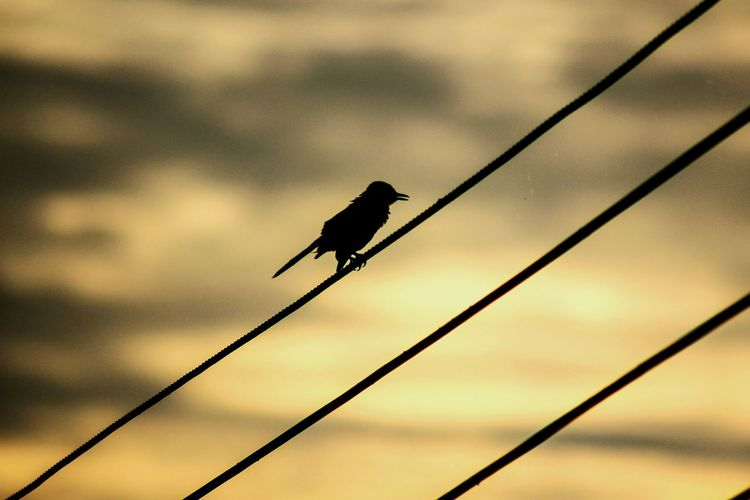 Low angle view of silhouette bird perching on wires