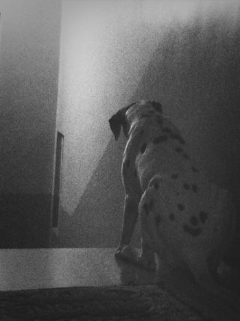 TheMinimals (less Edit Juxt Photography) Bw_dogs Details Of My Life