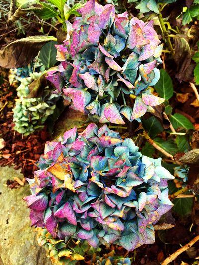 Verblasste Schönheit des Sommers. Flowers Nature Natural Beauty Flowerporn Plants Fichtelgebirge Fall Autumn Colors