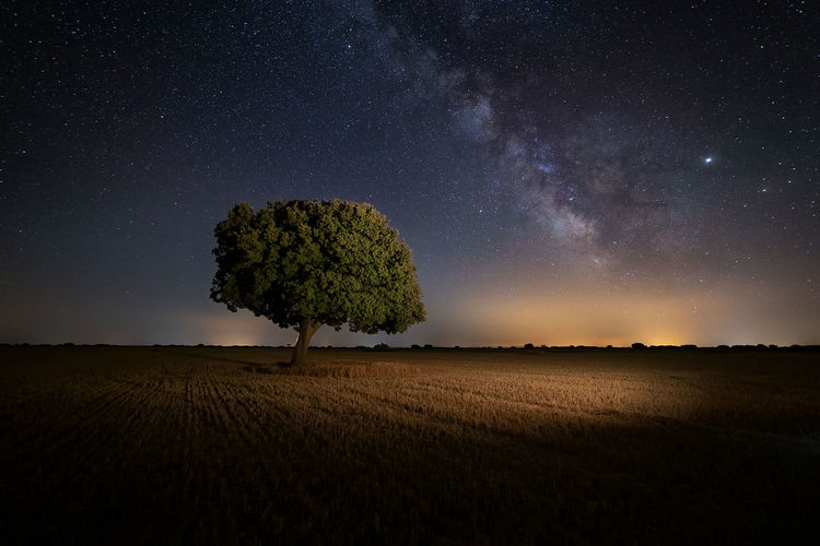 Plant growing on field against sky at night