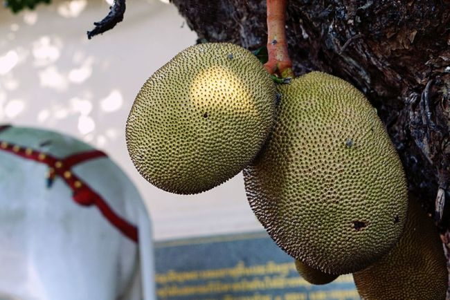 Tree Fruit Jackfruit TropicalFruit No People Focus On Foreground Close-up Thai Fruit Thailand