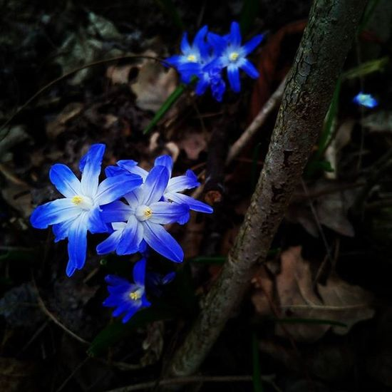 Nofilter Nice Natural Beautiful Epic Flower Prettynice Atforest Atdogwalk Dogwalk Inforest Blueandwhite Blue White Pretty