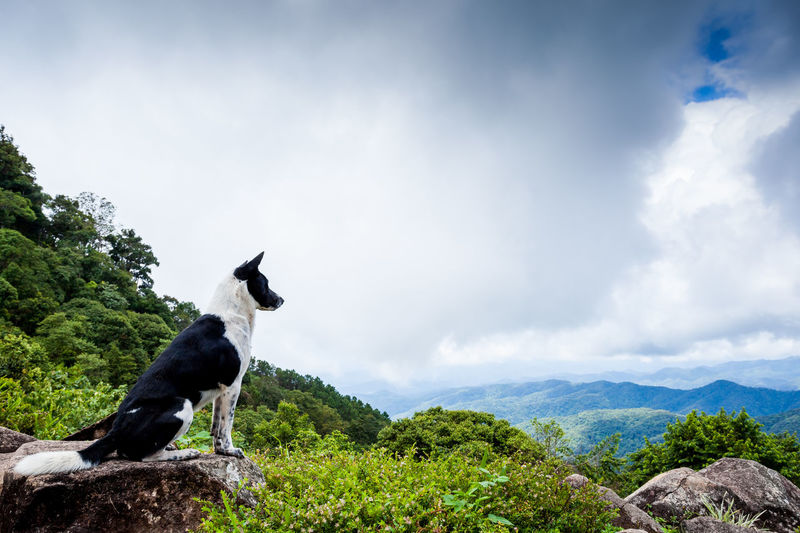 Lonely dog on the mountain Animal Themes Beauty In Nature Cloud - Sky Day Domestic Animals Landscape Lonely Don Mammal Mountain Mountain Range Nature No People One Animal Outdoors Pets Reflection Scenics Sky Tree Water