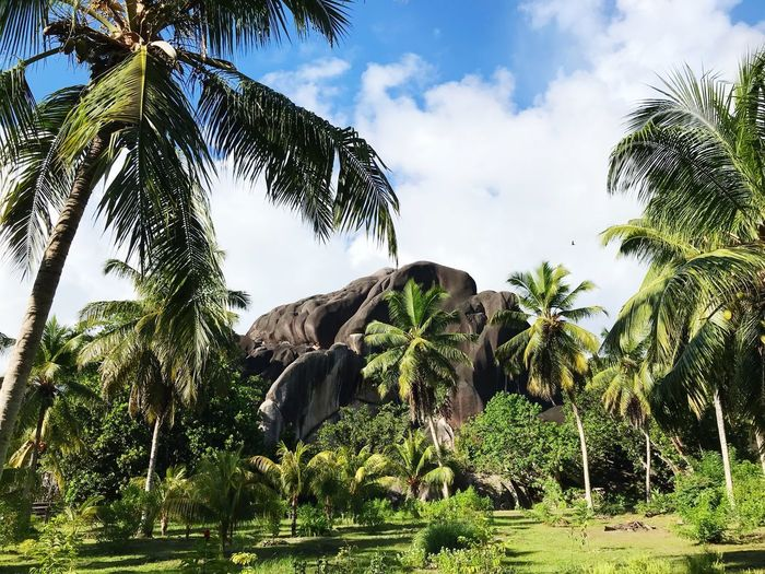Palm Tree Paradise Seychelles Sky Plant Tree Cloud - Sky Growth Nature Green Color Outdoors Landscape Rock Beauty In Nature