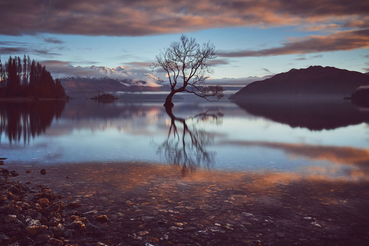 My Lonely Tree... Lonely Wanaka Bare Tree Beauty In Nature Cloud - Sky Idyllic Lake Lake Wanaka Nature New Zealand No People Non-urban Scene Outdoors Plant Reflection Reflections Scenics - Nature Sky Sunrise Thatwanakatree Tranquil Scene Tranquility Tree Water Waterfront