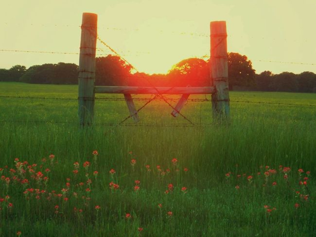 Beauty In Nature Fencepost Field Grass Grassy Green Color Growth Idyllic Indian Paintbrush Flowers Landscape Meadow Nature No People Orange Color Outdoors Pasture Fence Plant Rural Scene Scenics Sky Sun Sunset Tranquil Scene Tranquility Woodenpost