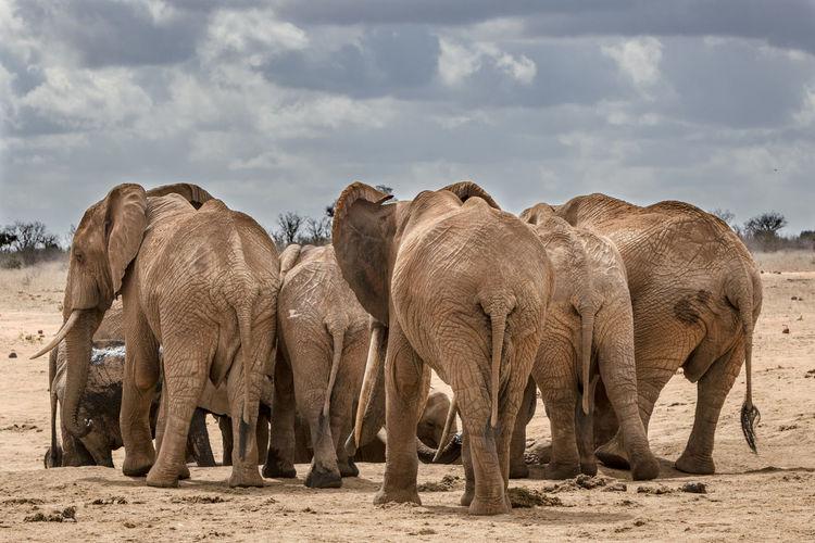 Elephants on field against cloudy sky