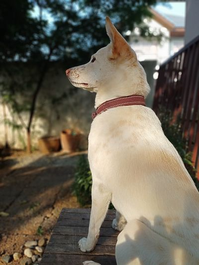 Side view of dog looking away