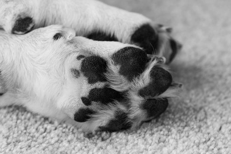 Cropped image of dog lying on carpet
