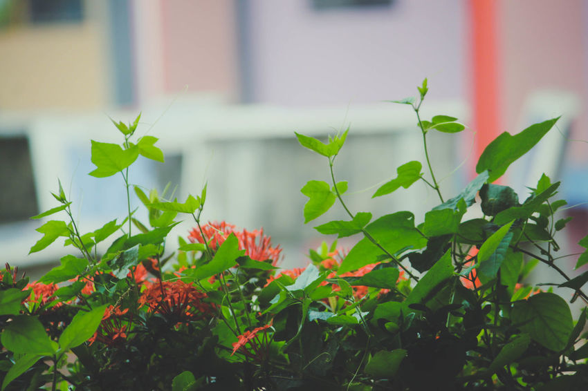 Beauty In Nature Flower Flowering Plant Freshness Green Color Growth Leaf Nature Outdoors Plant Selective Focus