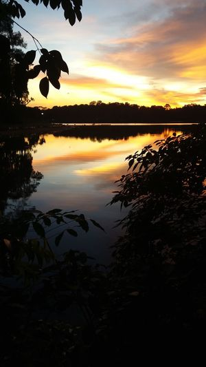 rainforest evening walk Nature Walk Evening Sun Sunset Colors Forest Walk Lake View Water And Landscape Water Reflections Water Ripple Nature Nature Landscape Rainforest Water Tree Sunset Lake Silhouette Reflection Sky Reflection Lake Dramatic Sky Reflecting Pool Romantic Sky Atmospheric Mood Cloud - Sky Calm Moody Sky