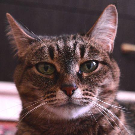 кошка кошки мурка домашнееживотное домашниелюбимцы домашнийпитомец Cat Cats Kitty Love