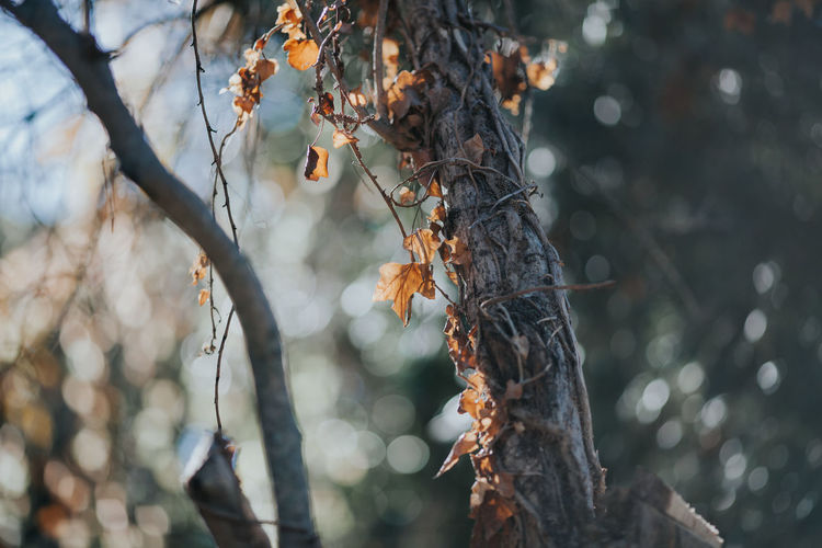 Autumn Autumn Colors Autumn Leaves Nature Nature Photography Autumn Colours Autumn🍁🍁🍁 Beauty In Nature Branch Close-up Day Fragility Freshness Growth Nature Nature_collection Outdoors Tree Tree Trunk Winteriscoming